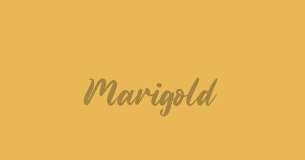 Marigold font thumb